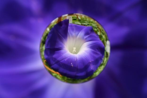 玉顔 -紫-