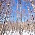 Photos: 樹々