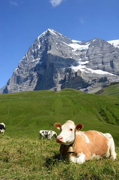 06.Cows and Eiger