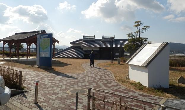 写真: 灘黒岩水仙郷4