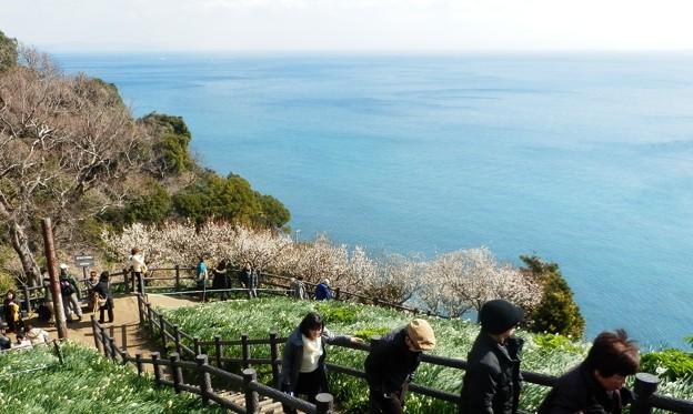 写真: 灘黒岩水仙郷30