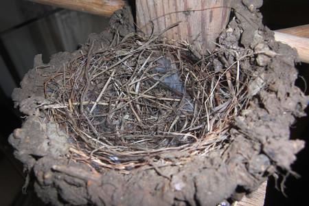 巣作りほぼ終了