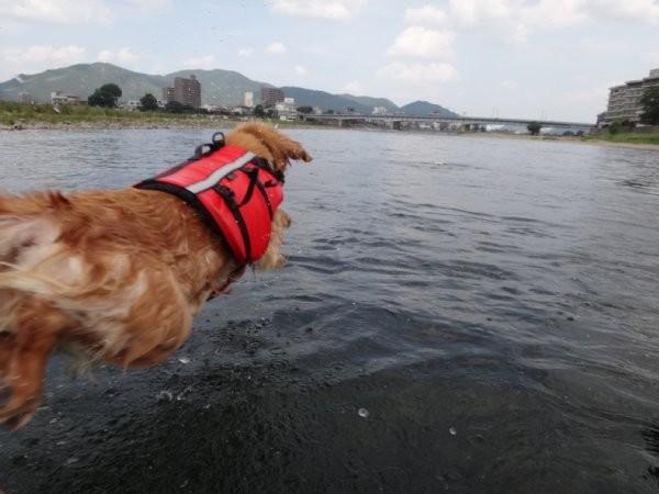 長良川 ララ ジャンプ